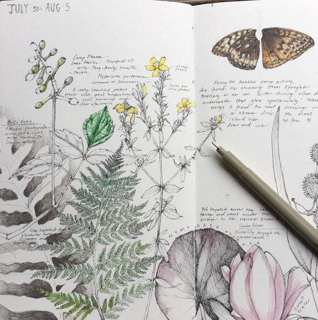 Lara Gastinger, sketchbooks, nature sketchbook, nature journal, sketchbook journal, nature sketchbook journal, Sketchbook Conversations