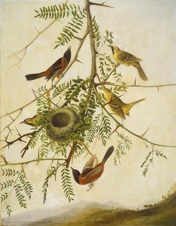 National Gallery of Art - Kidd, Joseph Bartholomew (copy of the work of John James Audubon)