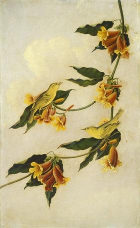 National Gallery of Art - Kidd, Joseph Bartholomew (copy of the work of John James Audubon) detail