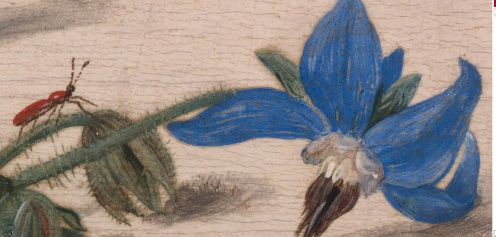jan-van-kessel-the-elder-insects-with-creeping-thistle-and-borage.1