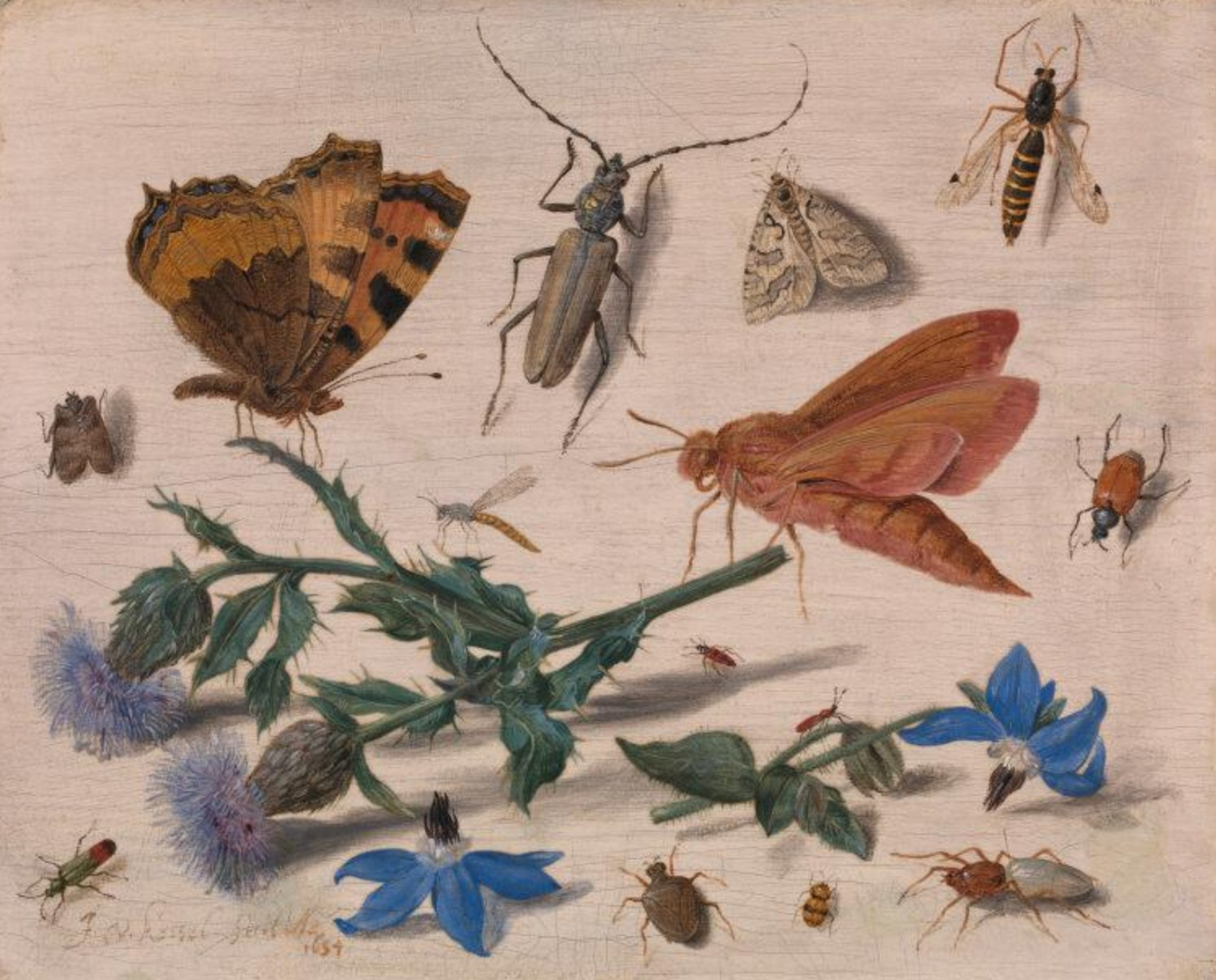 jan-van-kessel-the-elder-insects-with-creeping-thistle-and-borage.4