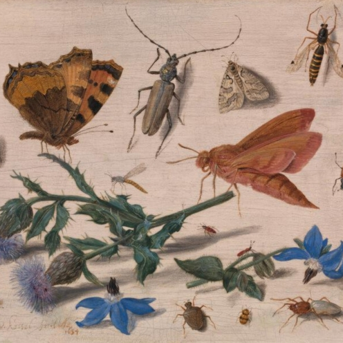 Butterflies, Moths and Insects with Sprays of Creeping Thistle and Borage (1654) Jan van Kessel the Elder, National Gallery UK in London