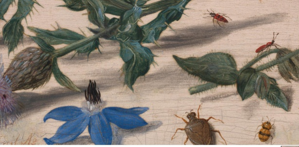 jan-van-kessel-the-elder-insects-with-creeping-thistle-and-borage.5