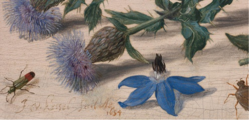 jan-van-kessel-the-elder-insects-with-creeping-thistle-and-borage.6