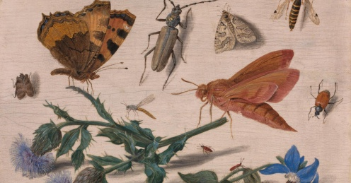 jan-van-kessel-the-elder-insects-with-creeping-thistle-and-borage