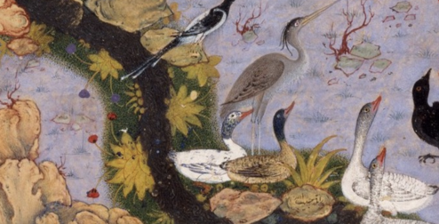 Folio 11r from a Mantiq al-tair (Language of the Birds) by Habiballah of Sava (active ca. 1590–1610) detail
