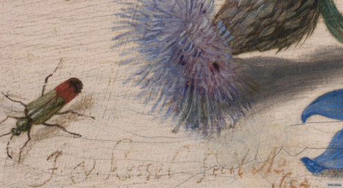 Butterflies, Moths and Insects with Sprays of Creeping Thistle and Borage (1654) Jan van Kessel the Elder, National Gallery UK in London (detail)
