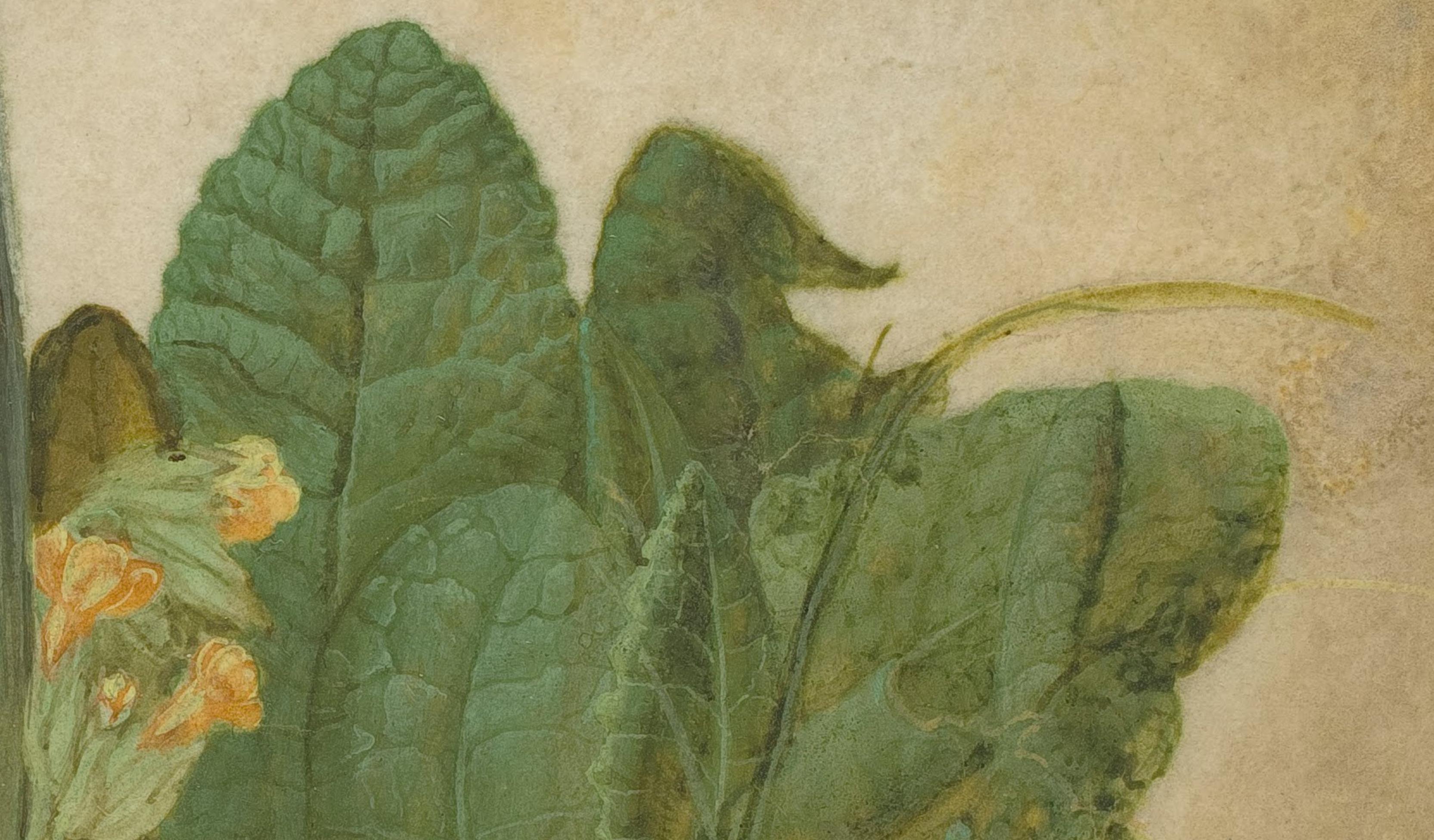 d0cf14734695 Albrecht Dürer  Tuft of Cowslips or Primula (1526) – At Sunnyside ...