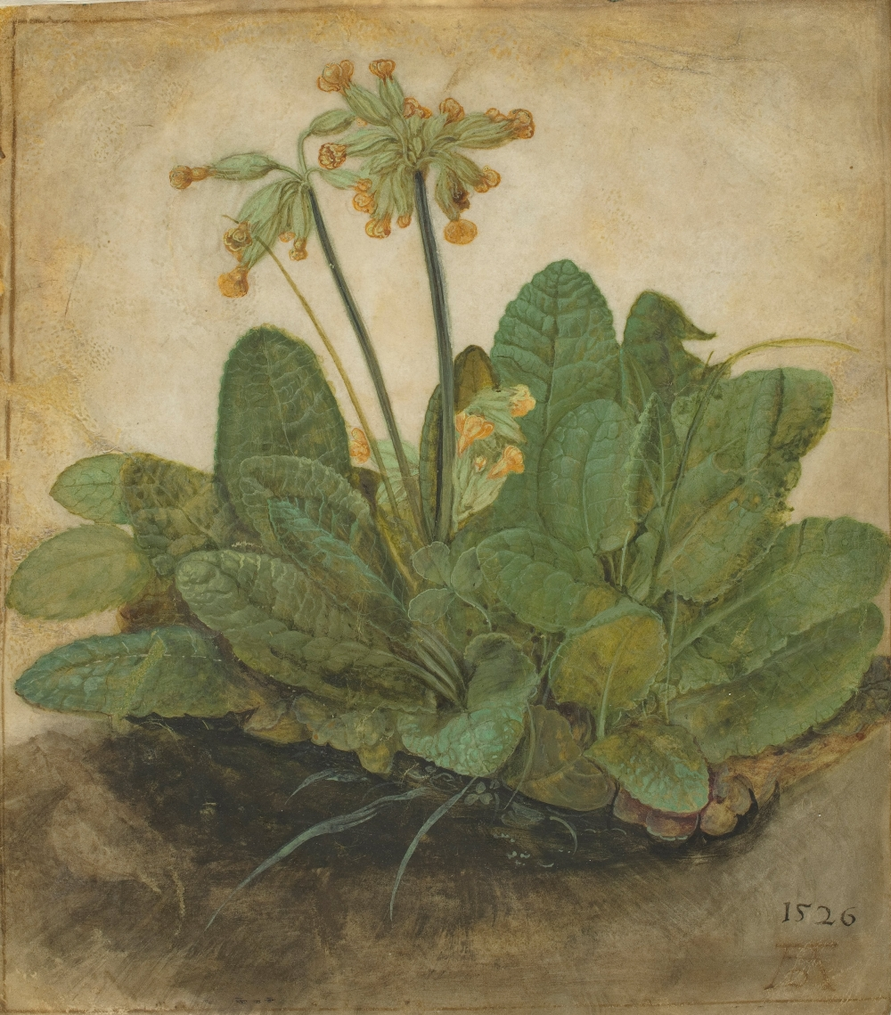 albrecht_dc3bcrer_-_tuft_of_cowslips_-_google_art_project